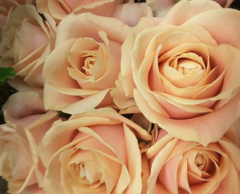 Fleurs de chez Plastiflor